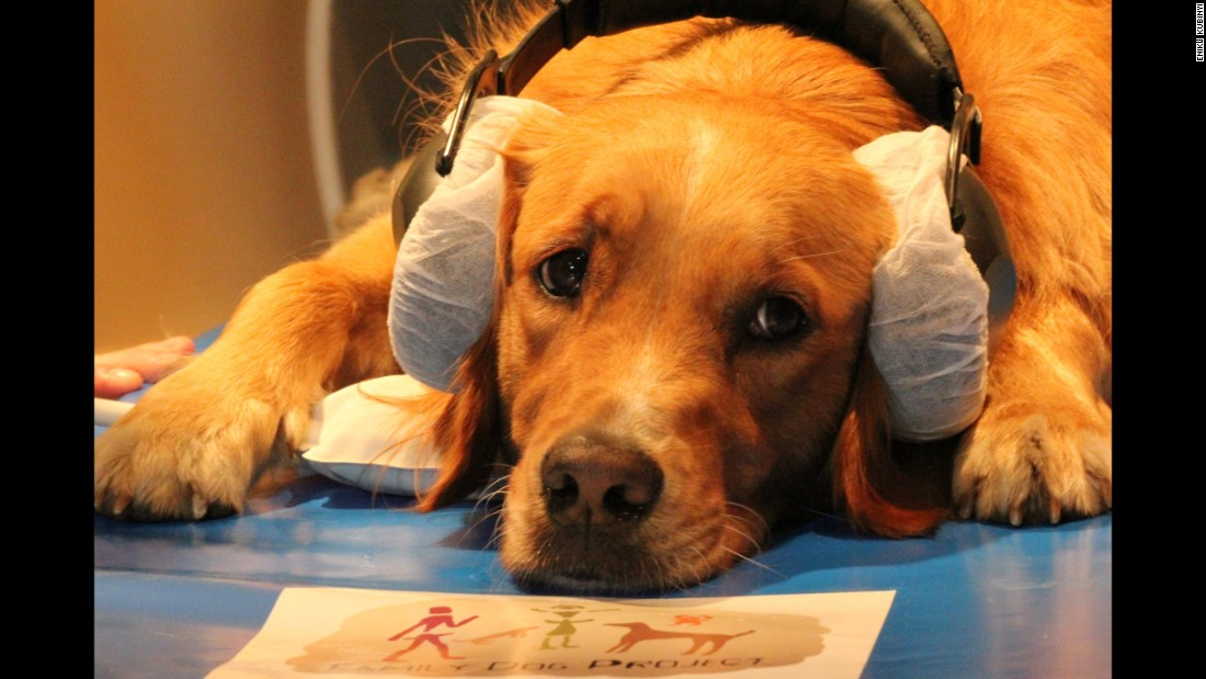 A dog, named Barack, is lying on the MRI scanner bed during the study.