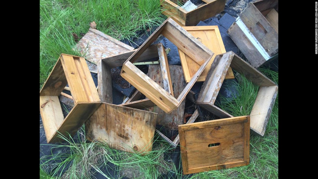 """This is all that's left of our once-thriving hives,"" Stanley said."