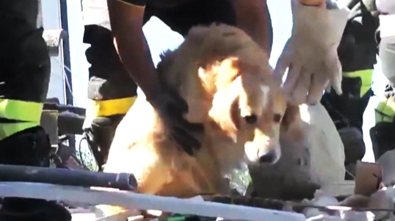 Dog rescued Italy earthquake _00000000