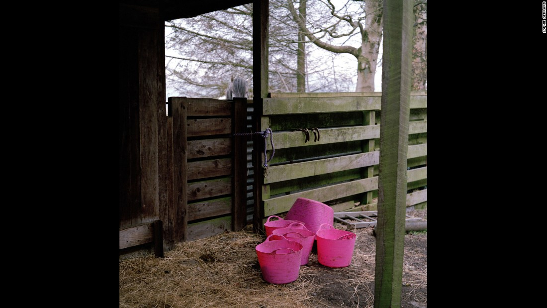 Pink buckets on Mary McCall-Smith's Connachan Farm in Crieff.