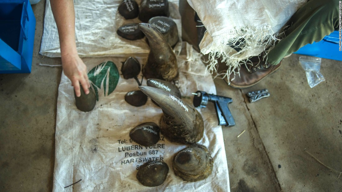 A selection of horns on display at the ranch. Somerville writes that due to a booming demand in China and Vietnam -- where rhino horns are erroneously believed to have medicinal purposes by some people -- horns can fetch $60,000 a kilogram on the black market. Rhino horns are made of keratin -- the same substance as hair and fingernails.