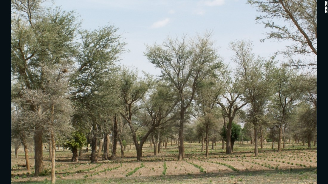 Niger is among the poorest countries in the world but it has achieved spectacular success through farmer managed natural regeneration methods.<br /><br />Over five million hectares of land have been restored, and around 200 million trees, which can provide food for millions of people.