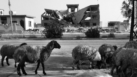 A flock of sheep walk down a deserted street in the town of Sinjar past rows of destroyed buildings. 