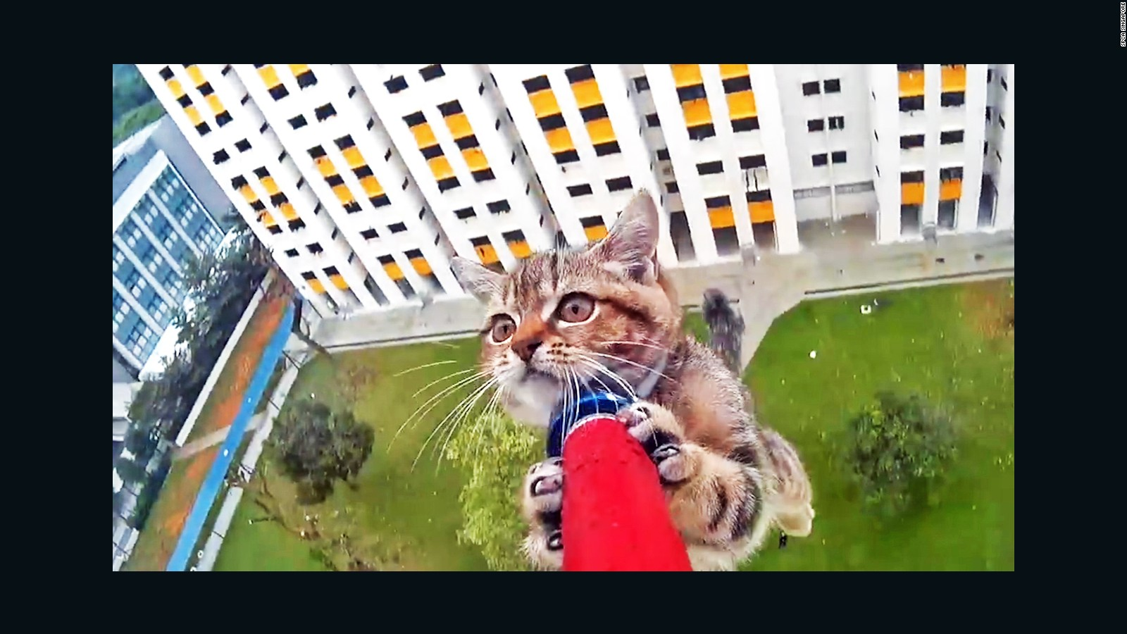 See kitten s harrowing 12 story rescue CNN Video
