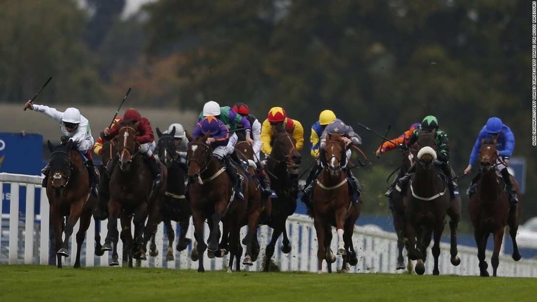 The field in the 2015 British Champions Long Distance Cup thunders down the track at Ascot.