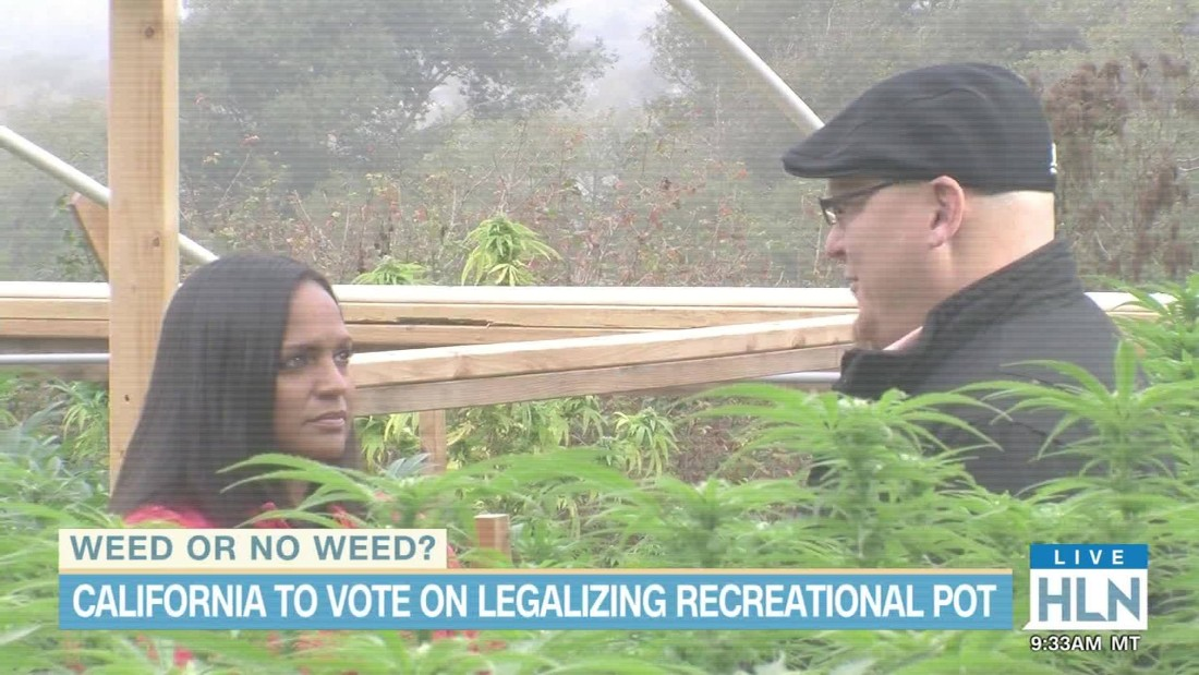 Group sues Florida county after marijuana omission on ballot