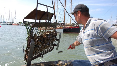 Harvesting oysters with fishermen.