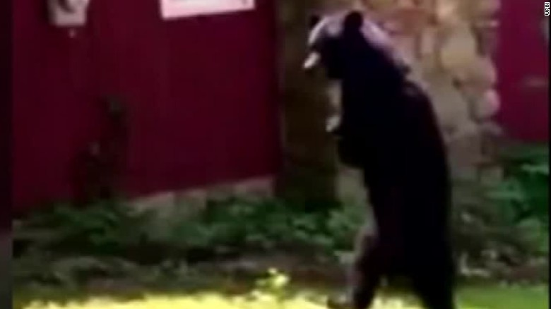 pedals the bear hunted and killed pkg_00000819