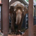 01 Elephant Sanctuary