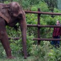 02 Elephant Sanctuary
