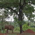 05 Elephant Sanctuary