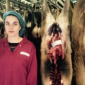 louise gray slaughterhouse