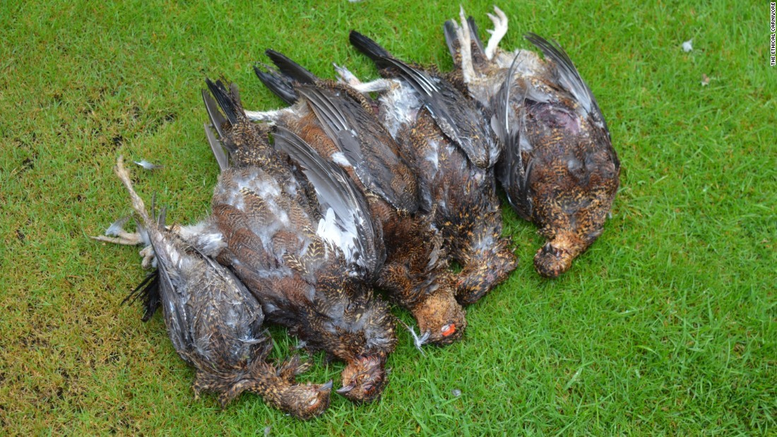 The results of a pheasant shoot, which are hugely popular but controversial in England.