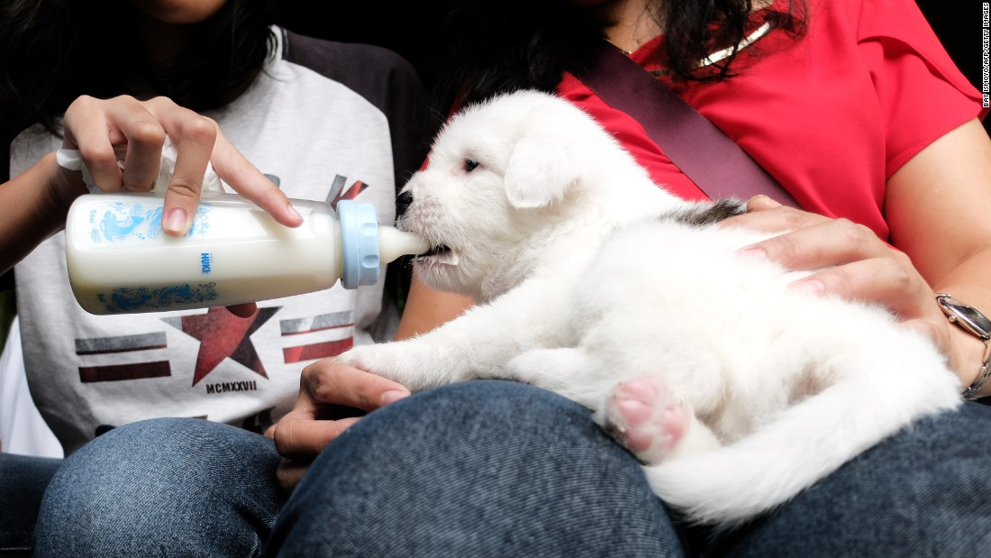 A puppy drinks milk before an animal blessing ceremony in Jakarta, Indonesia, on Saturday, October 15.