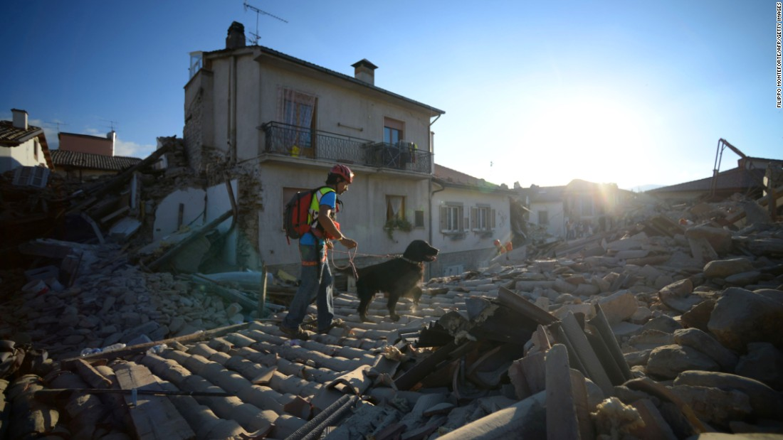 A search and rescue dog in the central Italian village of Amatrice looks for victims of a powerful earthquake that rocked the region on August 24, 2016.