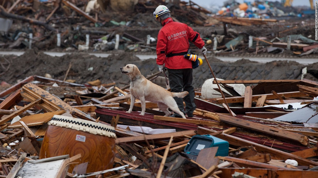 A member of the Japan Rescue Dog Association and his dog search for victims of an earthquake and tsunami in northern Japan on April 9, 2011.