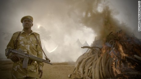 'The Ivory Game': Exposing the illegal trade pushing elephants to extinction