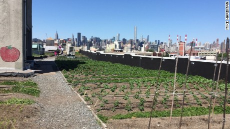 Brooklyn Grange is one of many rooftop farms surrounding New York City