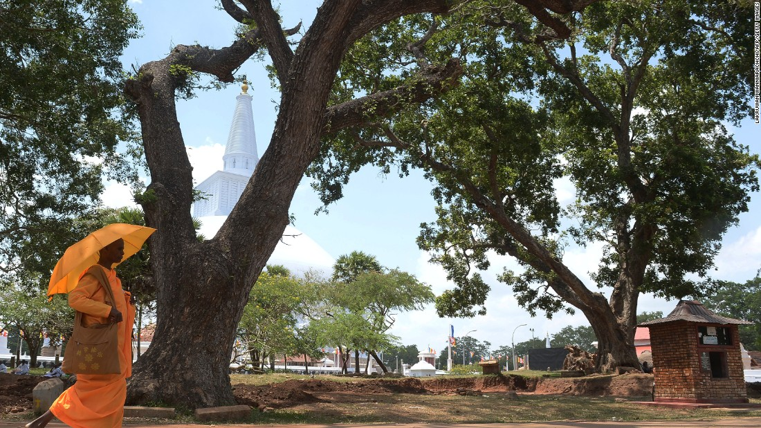 "The environmental hero has earned numerous awards and has a foundation named after her -- ""Saalumarada"" meaning ""row of trees."" Pictured, a holy banyan tree in Sri Lanka."