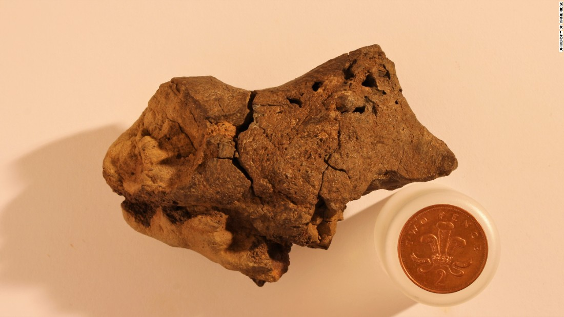 "Researchers found the <a href=""http://www.cnn.com/2016/10/28/health/fossil-brain-cambridge-trnd/index.html"">first preserved dinosaur brain</a> in history in 2016. They believe it was preserved due to the dinosaur dying in a swamp-like environment which mixed low levels of oxygen -- known to slow decay -- and acidity which can preserve soft tissue for long periods. It is 130 million years old."
