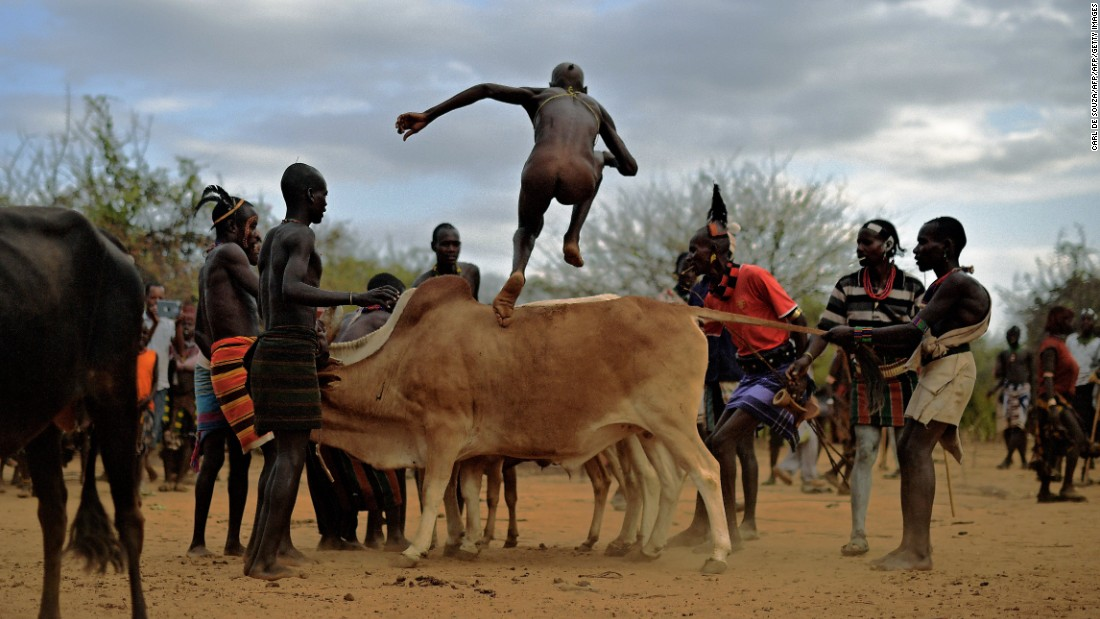 "Herdsmen become hurdlers in the Omo Valley, Ethiopia. Young men of the Hamar tribe, one of many in the valley, prove their manhood by jumping on prize bulls and then running across their backs -- all while naked. The purpose? It's a coming of age ceremony, and only when the participant has traversed the bull run four times will he be allowed to marry. Slip and you risk a hard fall: ""Because it's a manhood initiation ritual, [failure] is likely to affect the perception of someone's manhood and that of course can have all sorts of dire consequence,"" adds Dr Lewis."