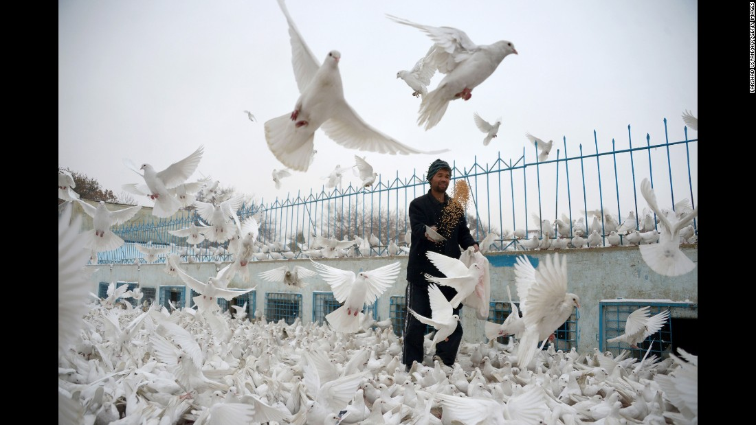 A man feeds pigeons in the courtyard of the Blue Mosque in Mazar-i-Sharif, Afghanistan, on Thursday, November 24.