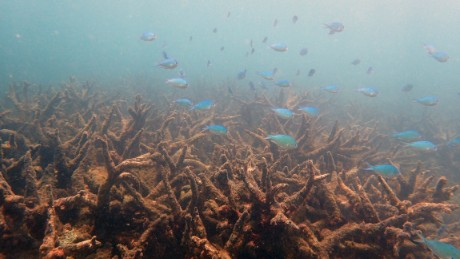 Australia's Great Barrier Reef suffers worst ever coral bleaching