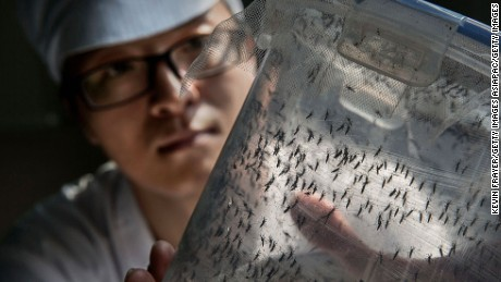 Inside China's 'mosquito factory' fighting Zika and dengue