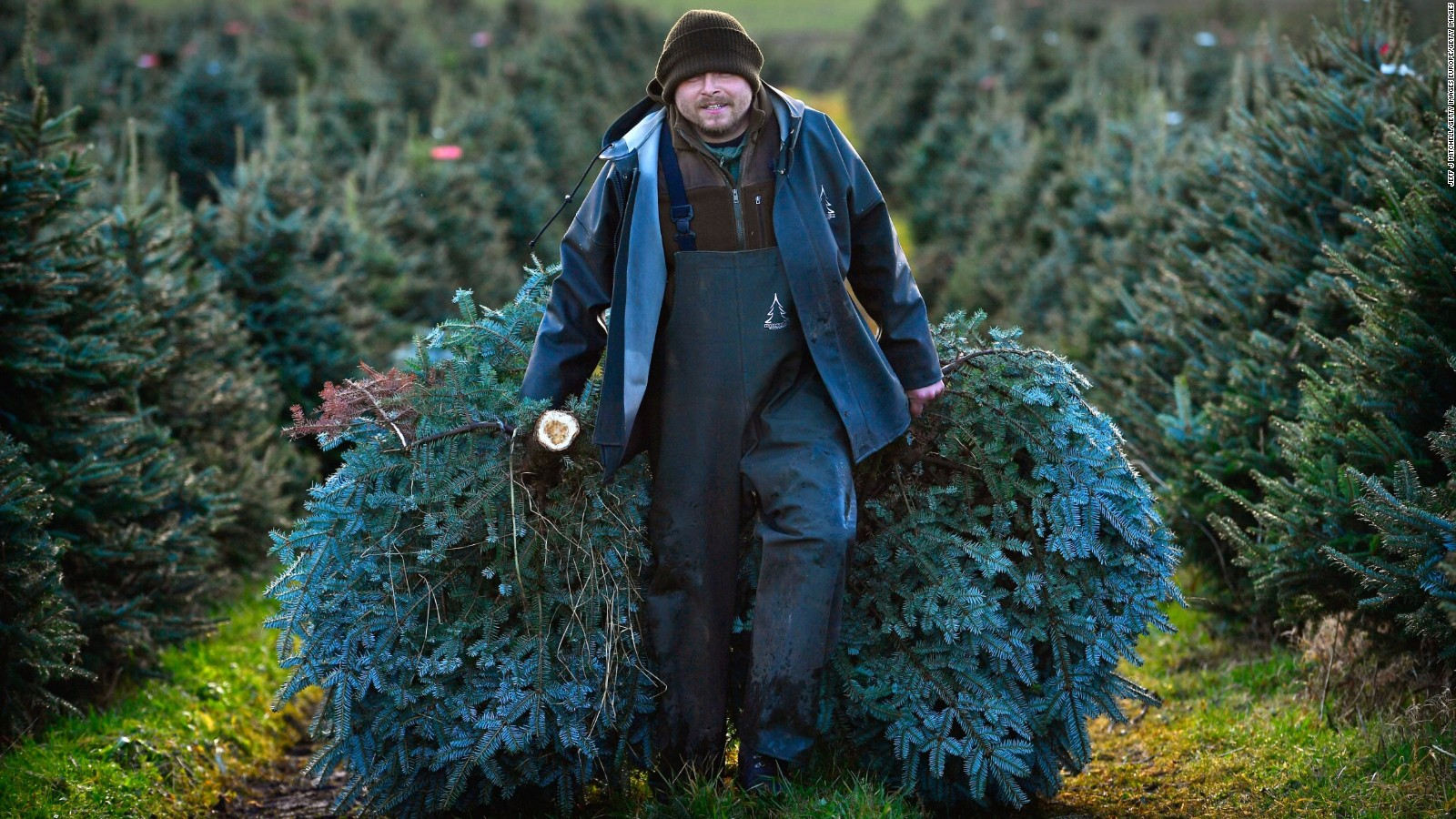 Real or fake: Which Christmas tree should you buy? - CNN