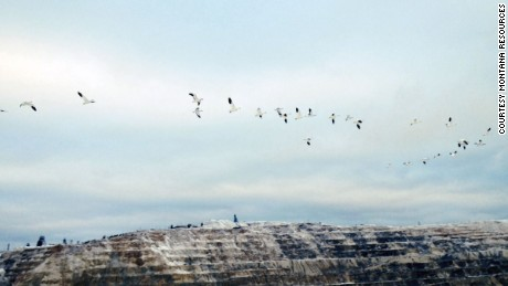 Snow geese leave the Berkeley Pit.