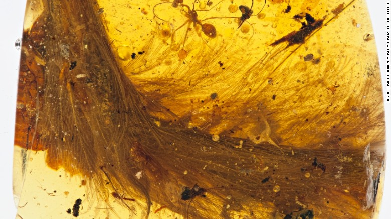 'Blood amber:' A portal into dinosaur times but an ethical minefield for paleontologists