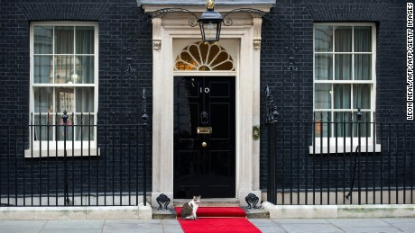 Larry the Downing Street cat sits on the red carpet outside number 10 Downing Street in central London on January 16, 2012. AFP PHOTO / LEON NEAL        (Photo credit should read LEON NEAL/AFP/Getty Images)