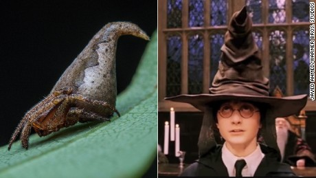 The scientists compared the newly-discovered spider to Harry Potter's sorting hat.