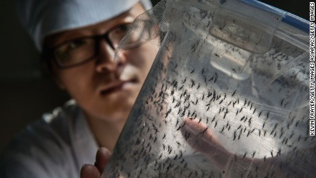 Zhang Dongjing displays a container of sterile adult male mosquitoes that are ready to be released in a lab in the mass production facility.