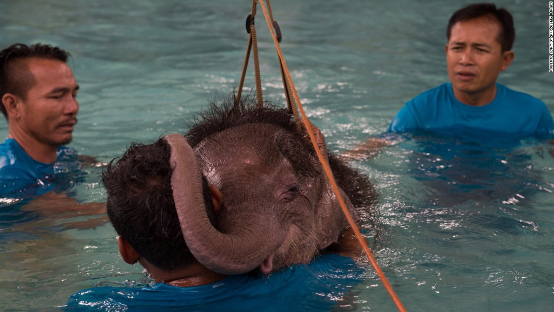 A 6-month-old elephant named Clear Sky rests her head on a man's shoulders during a hydrotherapy session in Thailand's Chonburi Province on Thursday, January 5. She lost part of her left foot in an animal trap, and the hydrotherapy is strengthening her leg muscles so she can learn to walk again.