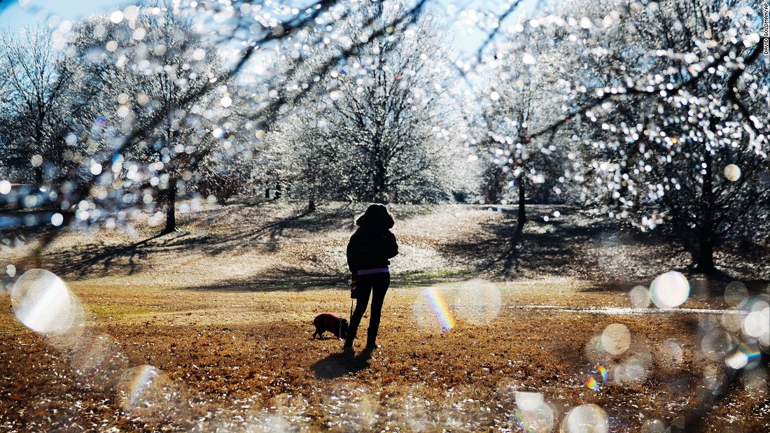 A woman walks her dog near ice-covered trees in Atlanta's Piedmont Park after a winter storm passed through on January 7.