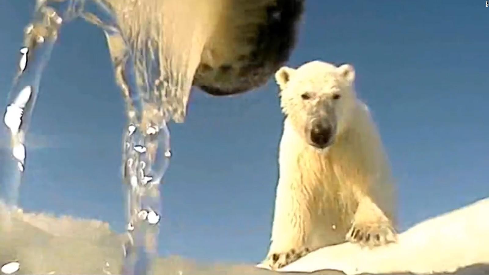 a polar bear view of the world cnn video
