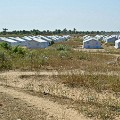 RESTRICTED IOM Nigeria-Benisheik-IOM emergency shelters-large