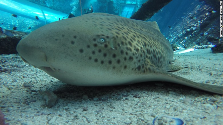 Shark in captivity gives 'virgin birth'