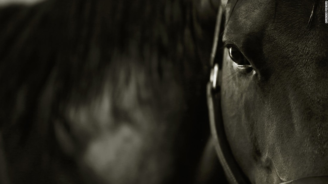 Smile The art of equine photography CNN
