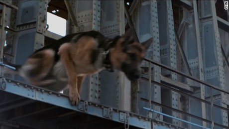 dogs purpose german shepard 2
