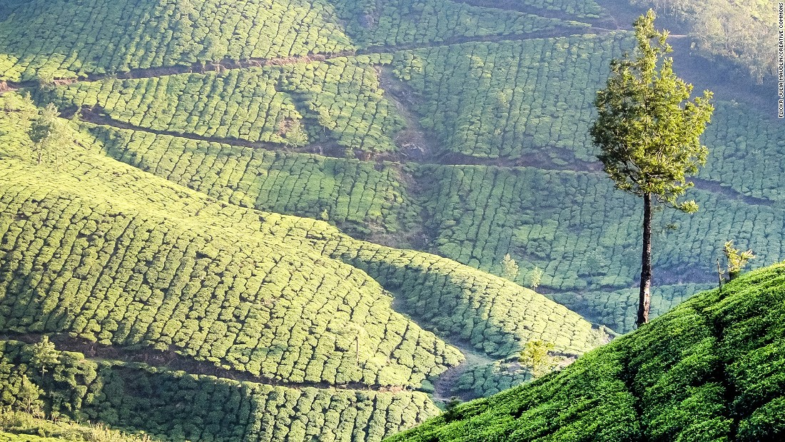 <strong>Munnar, Kerala: </strong>Known for its rolling hills and tea plantations, Munnar is a serene hill station of India's southern state of Kerala. It's also home to Anamudi Peak, the highest peak in south India and the largest population of Nilgiri Tahr, an endangered sheep species.