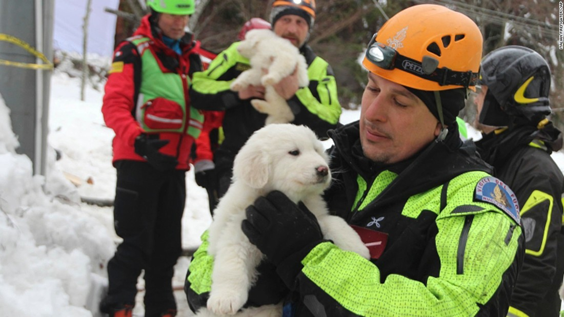 Emergency crew members carry three puppies that were dug out from under the snow covering Hotel Rigopiano on Monday, January 23. Rescuers cheered the discovery of the dogs, whose survival brings hope for those people who are still missing.