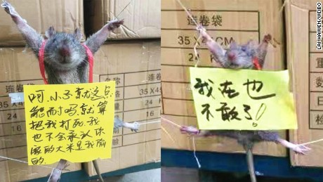 "Workers at a shop in China strung up a rat and put signs on it. The one on the right reads ""I won't dare do this again."""