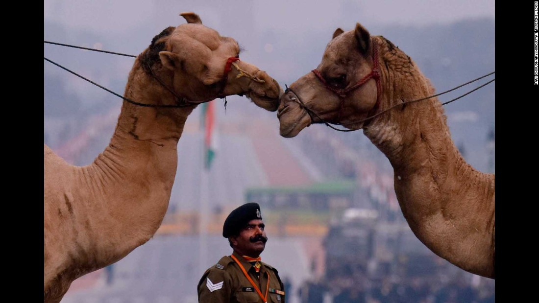 An Indian soldier watches camels during a ceremony rehearsal in New Delhi on Tuesday, January 24.