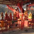 haridwar red tree temple