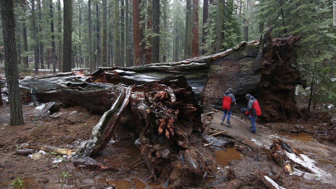 "A television crew checks out the iconic Pioneer Cabin Tree <a href=""http://www.cnn.com/2017/01/09/travel/drive-through-tree-trnd/"" target=""_blank"">that was toppled by a massive storm</a> Monday, January 9, near Arnold, California. The giant sequoia, known for the ""drive-through"" hole in its trunk, was in Calaveras Big Trees State Park.<br />"