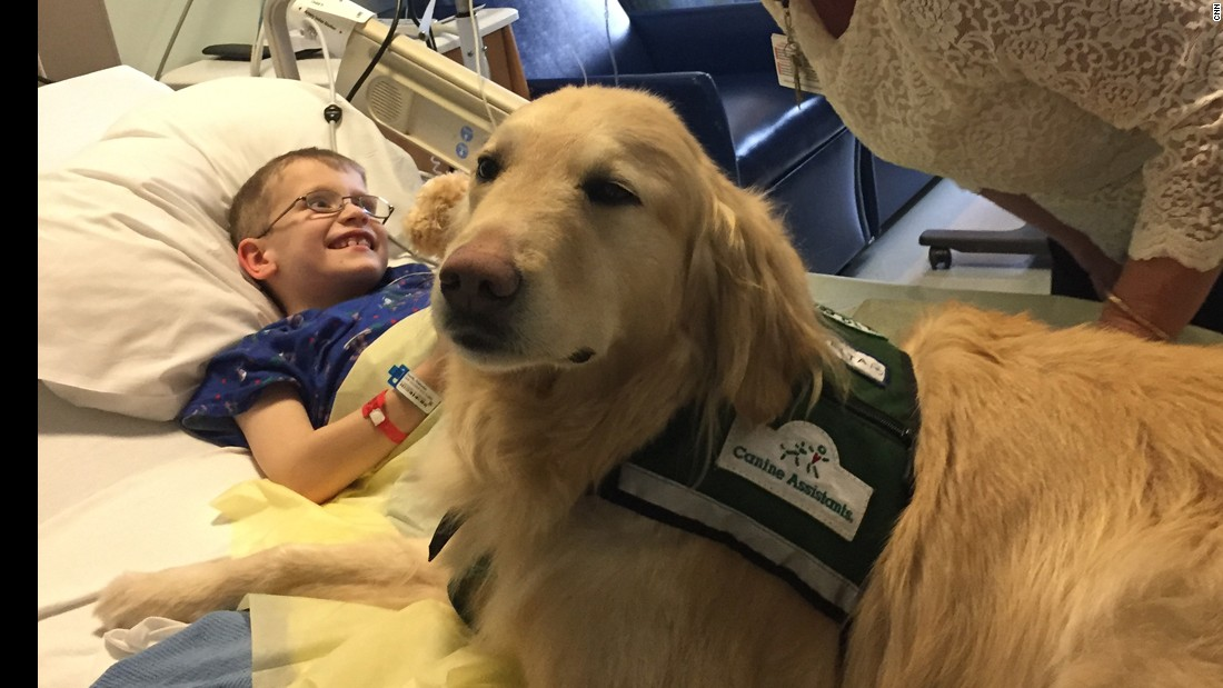Beloved therapy dog needs help of his own