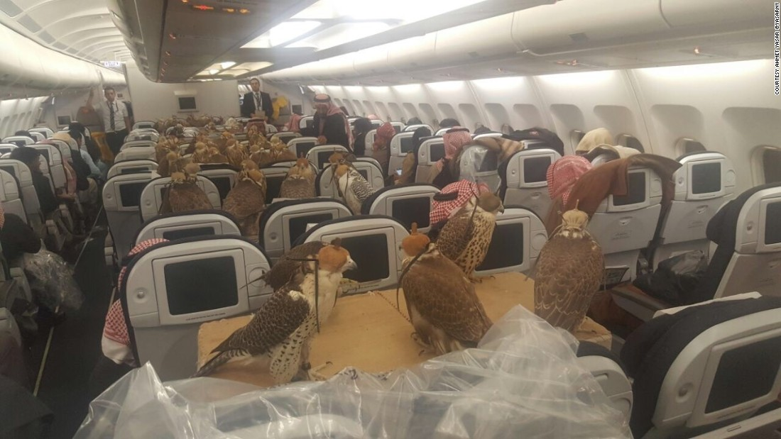 Falcons On A Plane First Class Treatment For Birds Of