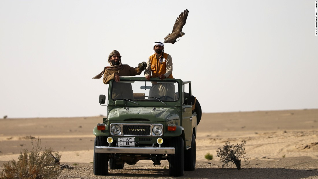Falconers in their four-by-four vehicle follow a hunting falcon at Al-Marzoom Hunting reserve, 150kms west of Abu Dhabi. The sport dates back thousands of centuries and has become such a significant part of the region's culture.